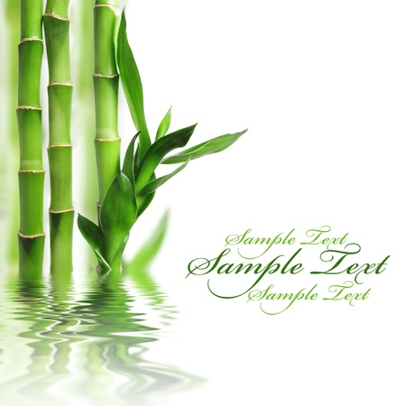 feuille de bambou: Vert fronti�re en bambou, avec copie espace