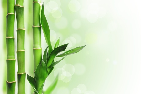 guadua: Bamb� verde trasfondo bokeh Foto de archivo