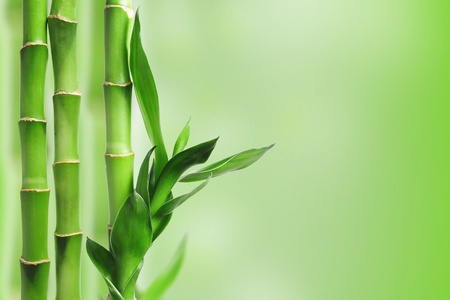 Green bamboo against bokeh background Stock Photo