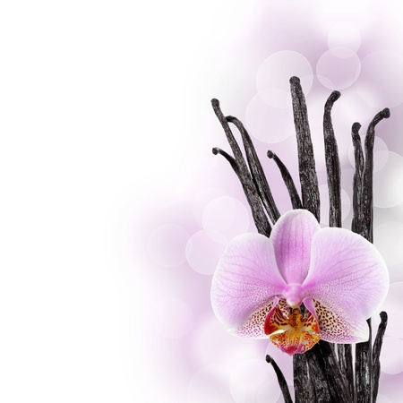 Vanilla beans and orchid flower against bokeh background Stock Photo - 8918390