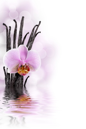 Vanilla beans and orchid flower against bokeh background Stock Photo