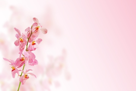 Background image of Pink orchid flower Stock Photo - 8918383