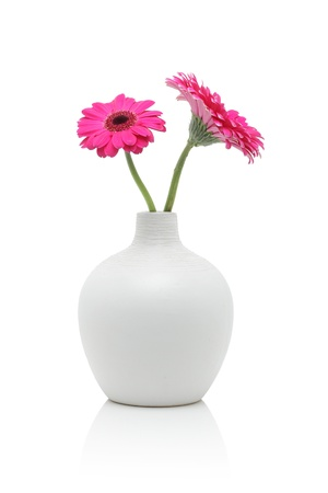 Two pink gerbera flowers in white vase, isolated on white
