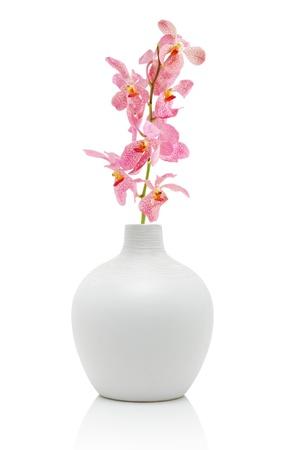 白で隔離される白い花瓶のピンクの蘭 写真素材