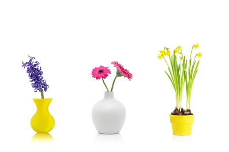 Spring flowers in vases and pot, isolated on white photo