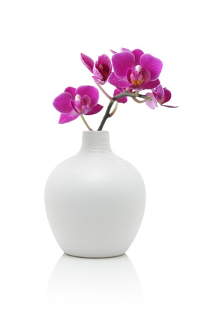 Orchid in white vase, isolated on white Stock Photo