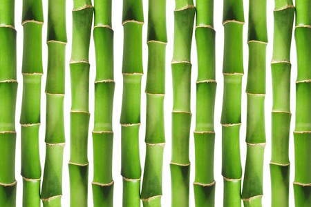 Green bamboo background image Stock Photo - 9081659