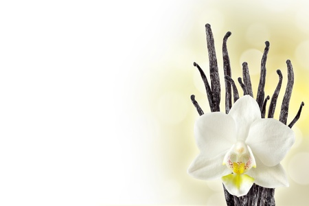 Vanilla beans and orchid flower photo