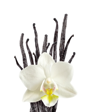 バニラ豆と蘭の花 写真素材