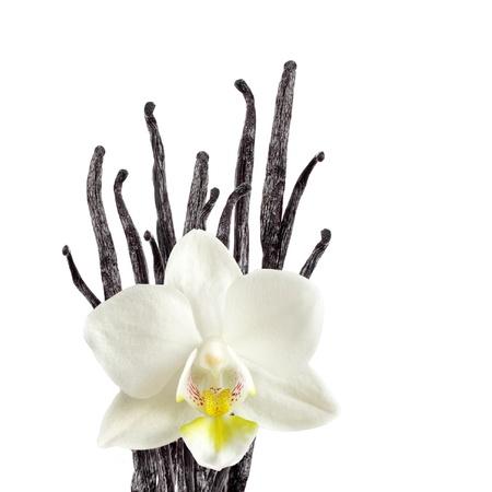 flor de vainilla: Granos de vainilla y flor orquídea Foto de archivo