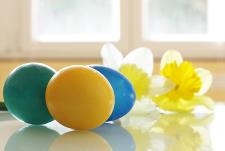 Painted Easter Eggs and Daffodils on the table photo