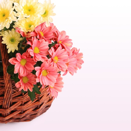 Pink and yellow gerbera flowers in wicker basket with copy space photo