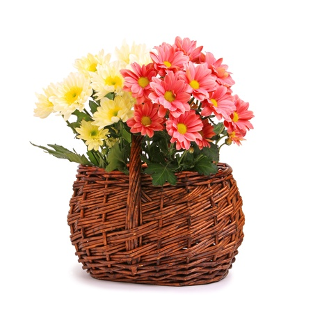 Pink and yellow gerbera flowers in wicker basket photo