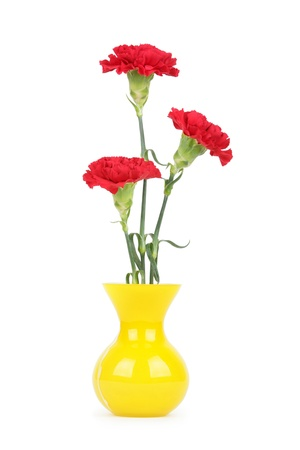 Three carnation flowers in vase isolated on white photo