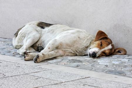 Abandoned dog lying on the street floor