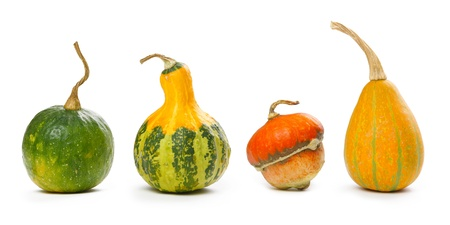 Decorative pumpkins isolated on white photo