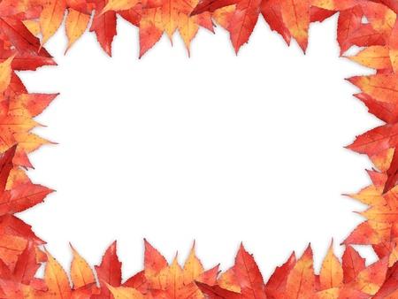 Maple leaves border, isolated on white photo