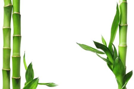 白で隔離される緑の竹枠