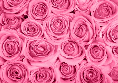 pink roses: Background image of pink roses Stock Photo