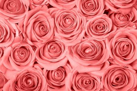 ピンクのバラの背景イメージ