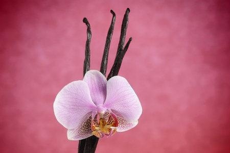 Vanilla beans and orchid flower against pink background  photo