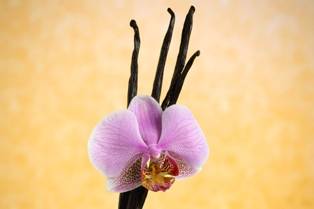 Vanilla beans and orchid flower against yellow background photo