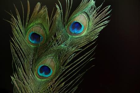 plumas de pavo real: Tres plumas de pavo real sobre fondo negro