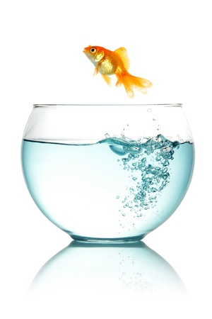 Goldfish jumping out of fishbowl isolated on white photo