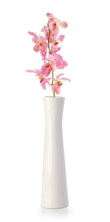 Pink Orchid flower in white vase isolated on white Stock Photo