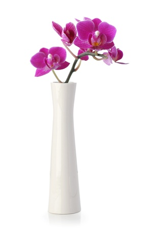 Pink Orchid flower in white vase isolated on white Banco de Imagens