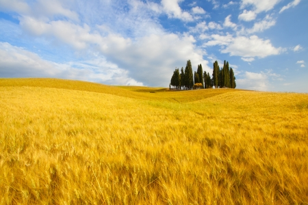 val d'orcia: Famous tree group in Val dorcia Stock Photo