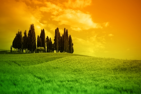Typical lanscape in Tuscany, Italy photo