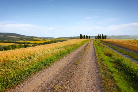 Typical tuscany landscape in the evening Stock Photo - 14481849