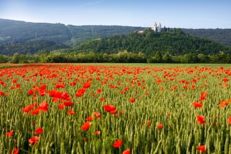 slovenia: Miren Castle and poppy field in spring, Slovenia