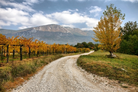 wine road: Beautiful nature in autumn colors