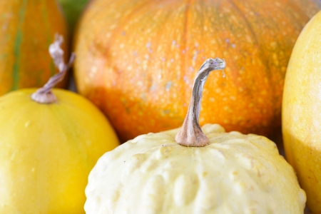 Orange decorative pumpkins. background image Stock Photo - 15818329