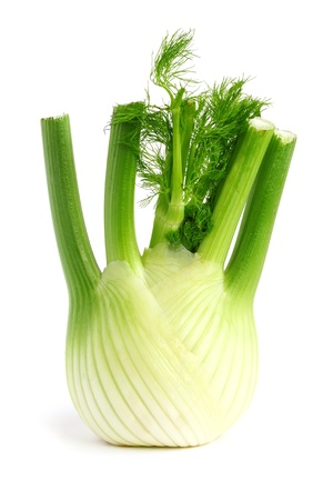 Fresh, organic fennel on a white background