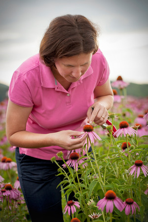 Real farmer woman in coneflower field Stock Photo