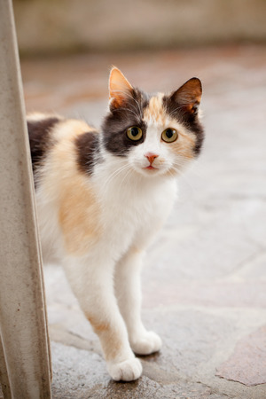 distrustful: Distrustful domestic cat with big eyes