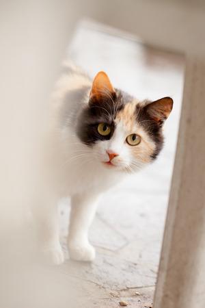 distrustful: Distrustful domestic cat with big eyes hiding