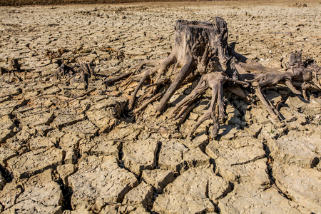 dead animal: Droughted ground where is usually lake Vogrscek