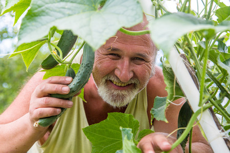 agronomist: Real senior farmer in his home garden checking the vegetables Stock Photo