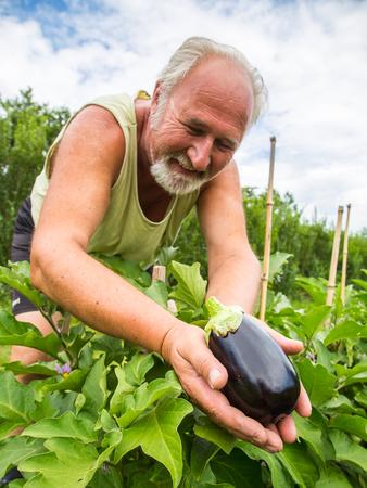 Real senior farmer in his home garden checking the vegetables Stock Photo