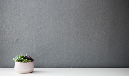 Modern succulent plants in wooden pot against gray wall