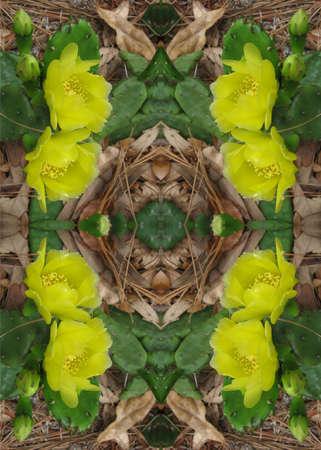 Cactus flowers kaleidoscope
