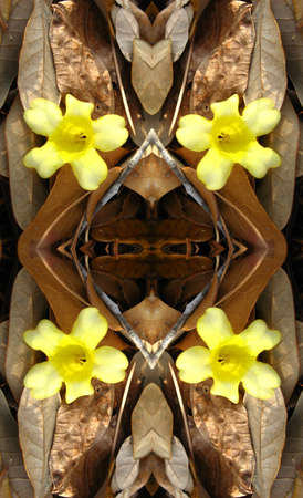 Jasmine and dead leaves kaleidoscope Imagens
