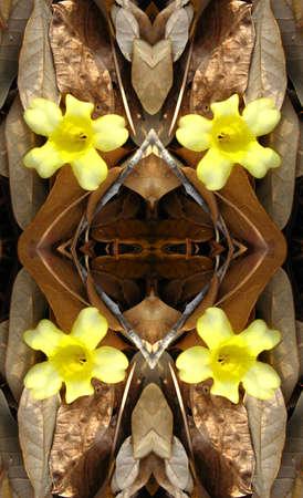 dead leaves: Jazm�n y hojas muertas caleidoscopio Foto de archivo