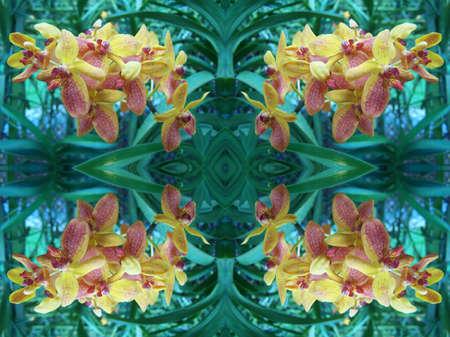 Orchid kaleidoscope Imagens