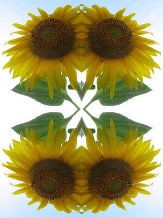 Sunflowers kaleidoscope Imagens