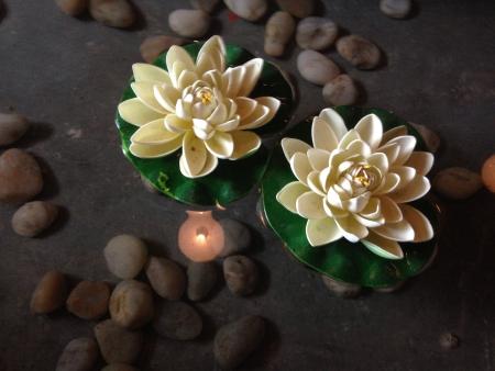 Lotus flowers floating Reklamní fotografie